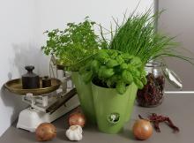 EMSA Fresh Herbs Kräutertopf mit Bewässerungssystem