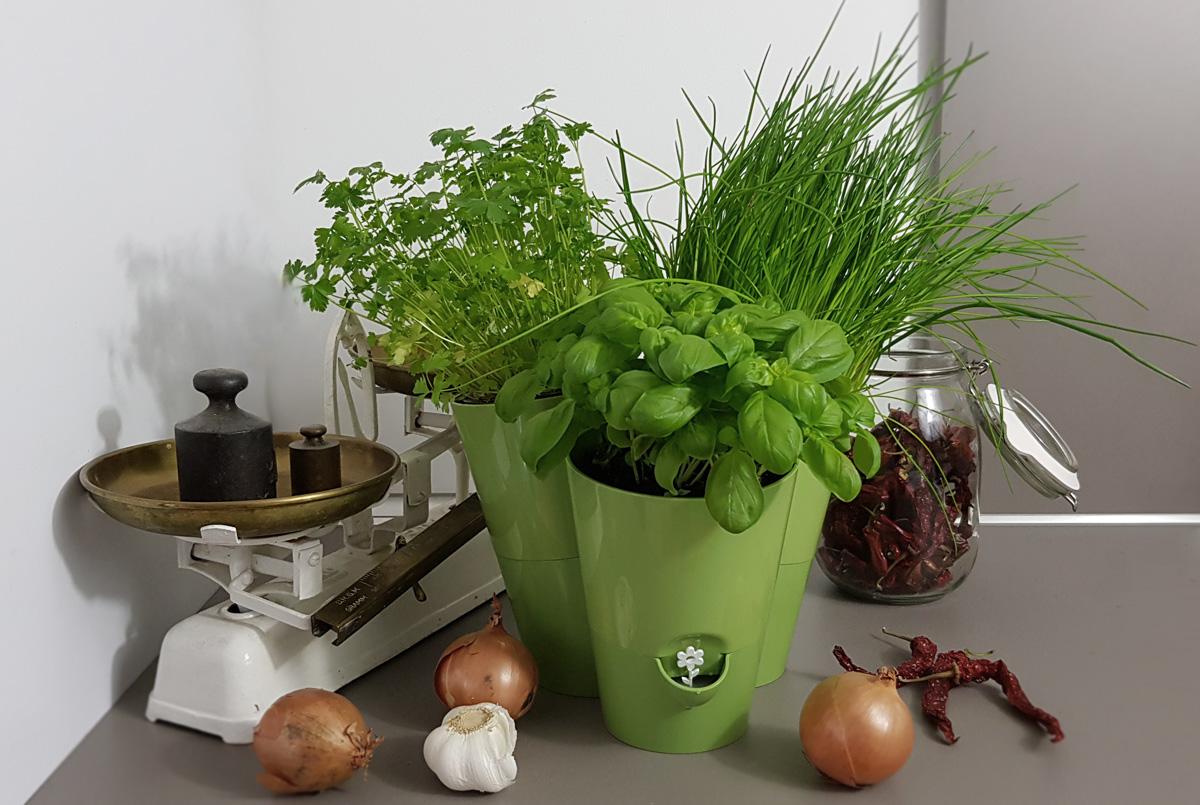 EMSA Fresh Herbs Kräutertopf