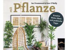 Buchvorstellung: Zimmer mit Pflanze